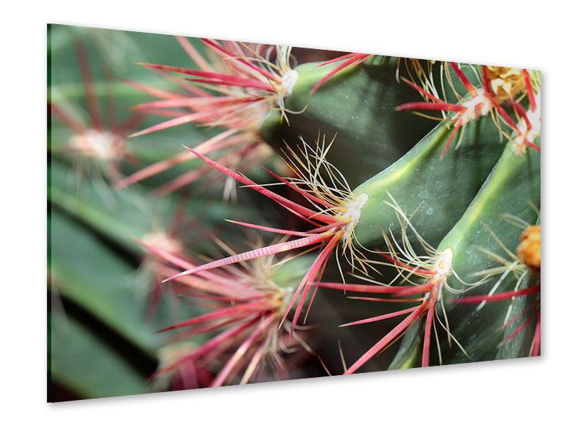 Acrylglasbild Die Kaktusblüte