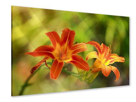 Acrylglasbild Natural Lilien