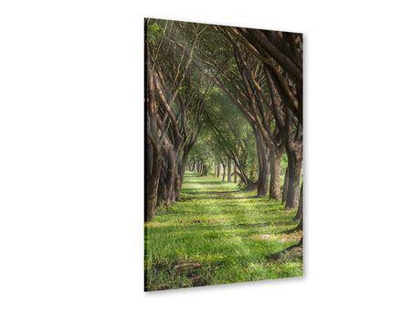 Acrylglasbild Im Forstwald