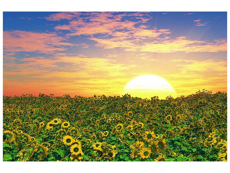 Acrylglasbild Blumenpanorama bei Sonnenuntergang