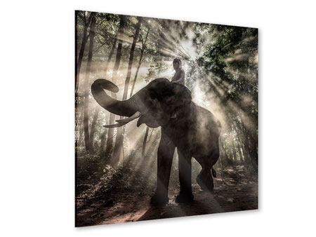 Acrylglasbild Der Elefant