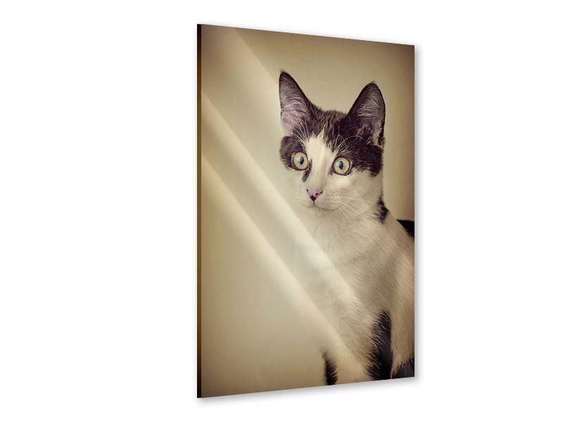 Acrylglasbild Katze