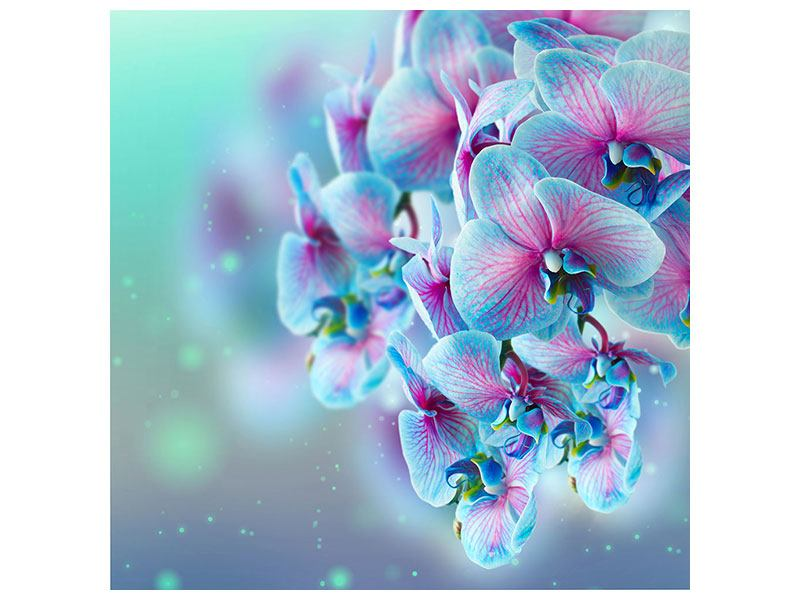 Acrylglasbild Farbige Orchideen
