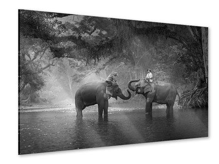 Acrylglasbild Zwei Elefanten