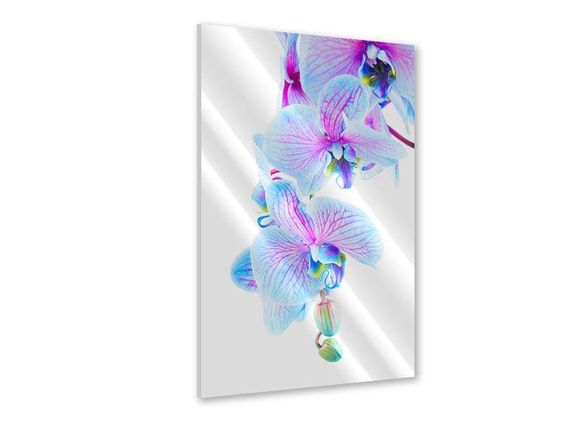 Acrylglasbild Orchideen-Schmetterling