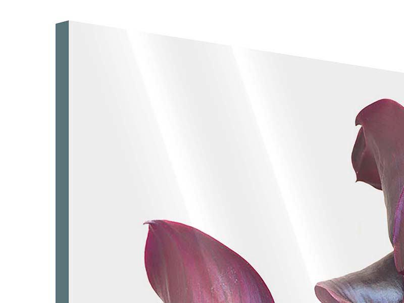 Acrylglasbild Bezaubernde Calla
