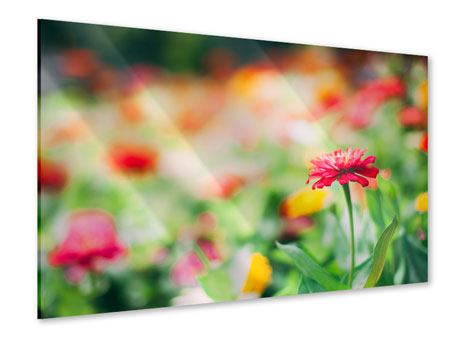Acrylglasbild Im Blumengarten