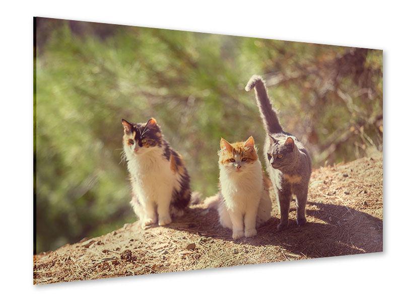 Acrylglasbild Katzen im Garten