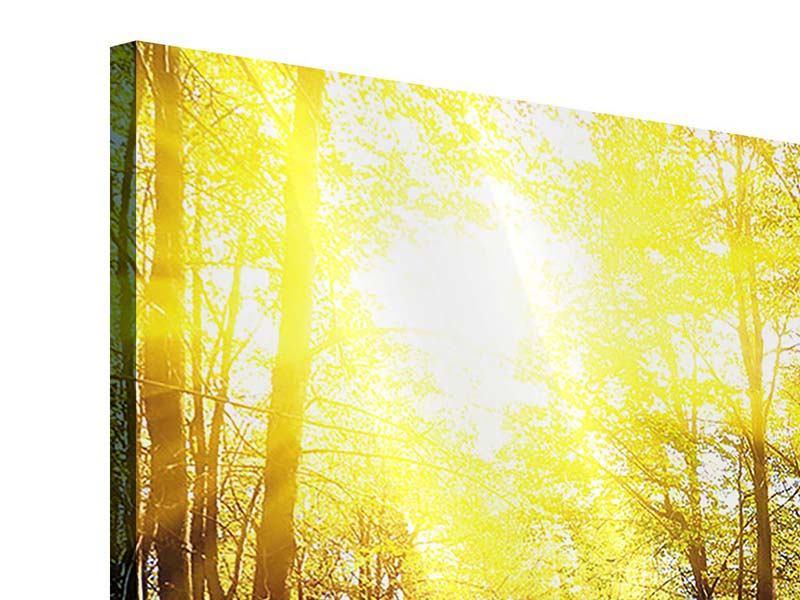 Acrylglasbild Waldspaziergang in der Herbstsonne