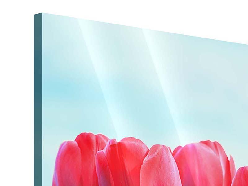 Acrylglasbild Rote Tulpen