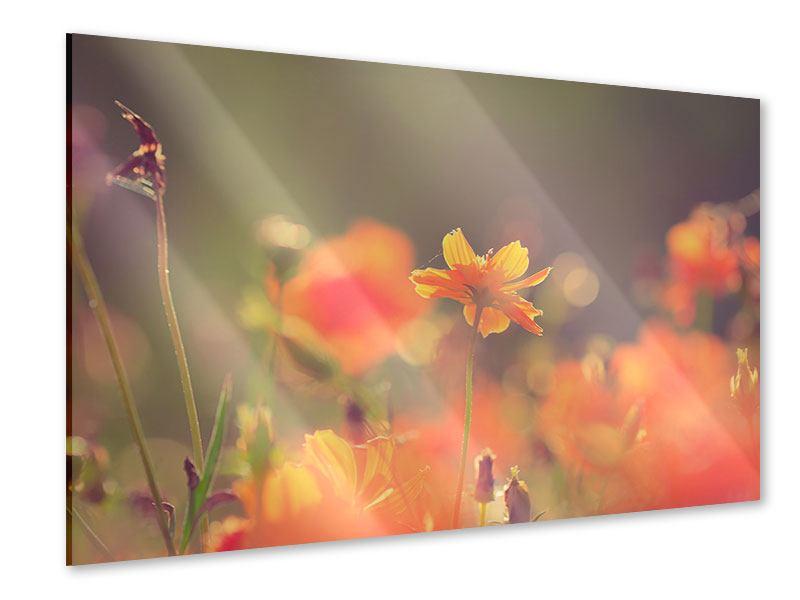 Acrylglasbild Blütenpracht