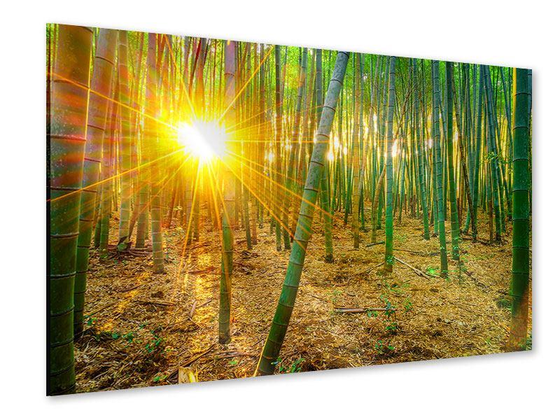 Acrylglasbild Bambusse