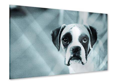 Acrylglasbild Boxer