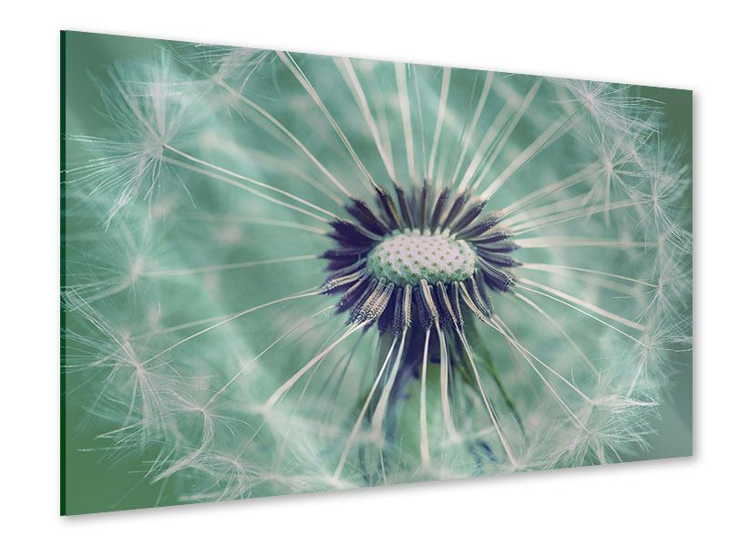 Acrylglasbild Close Up Pusteblume