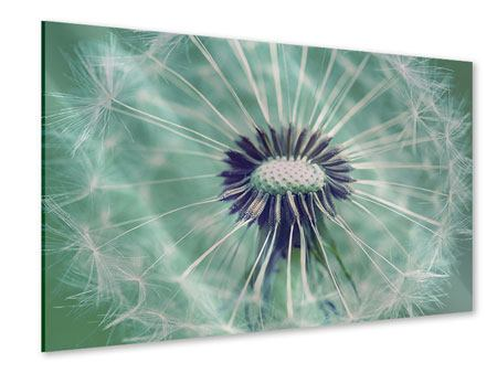 Acrylglasbild Close Up Pusteblume