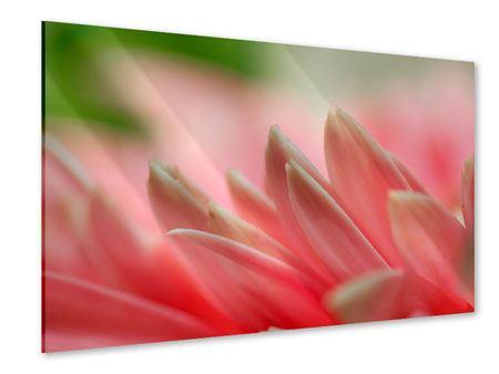 Acrylglasbild Close Up einer Blüte