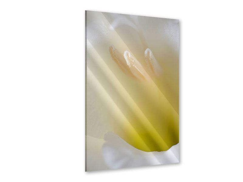 Acrylglasbild Das XXL Kelchblatt