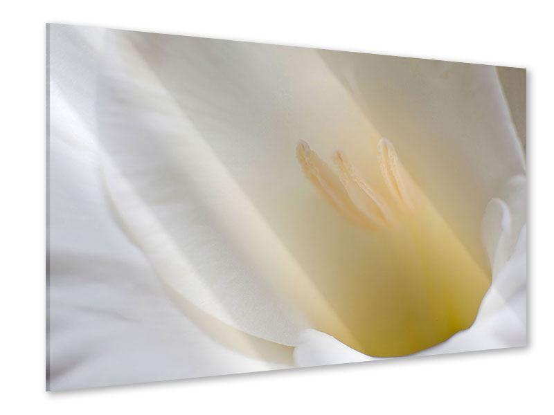 Acrylglasbild In einer Blüte