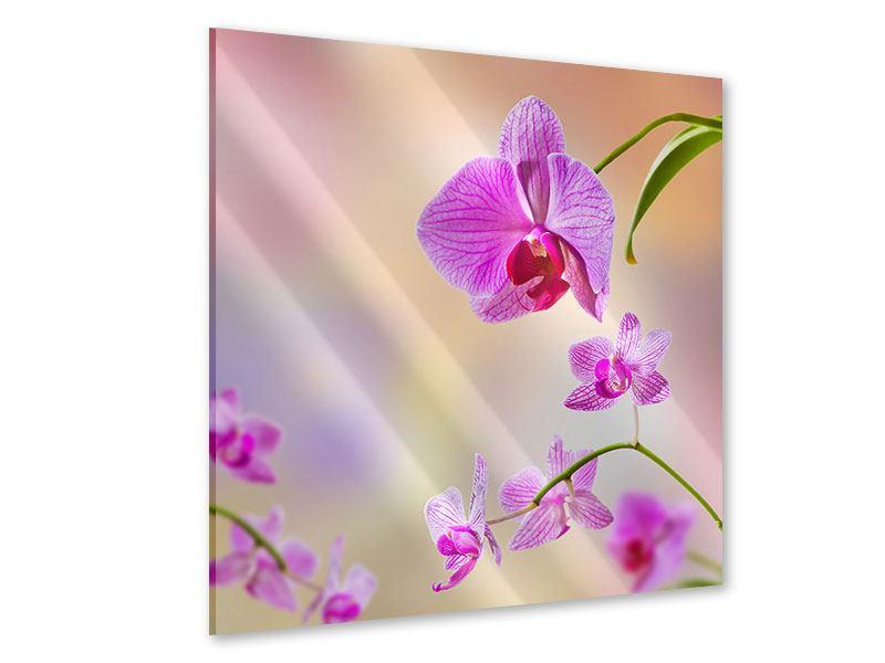 Acrylglasbild Romantische Orchideen