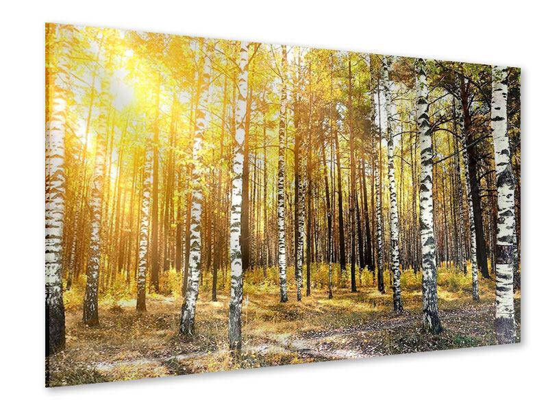 Acrylglasbild Birkenwald