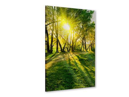Acrylglasbild Waldweg im Sonnenlicht