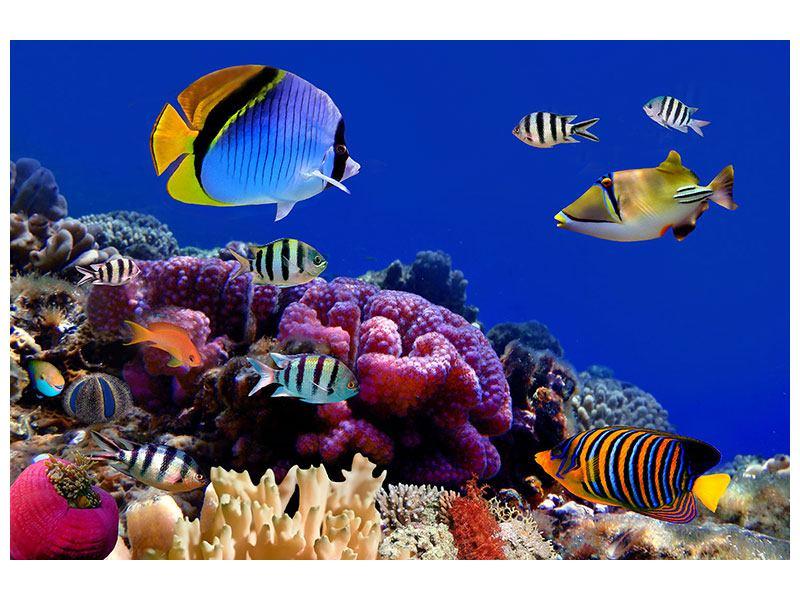 Acrylglasbild Welt der Fische