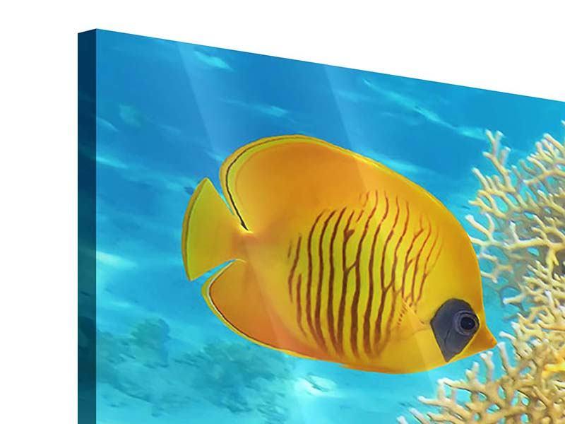 Acrylglasbild Fischreichtum