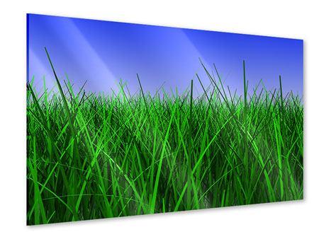Acrylglasbild Im Gras