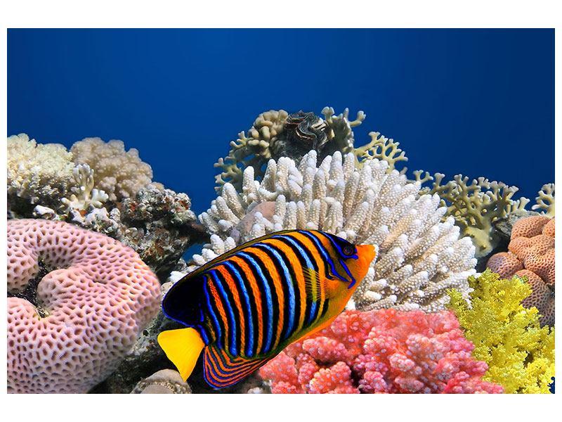Acrylglasbild Mit den Fischen tauchen