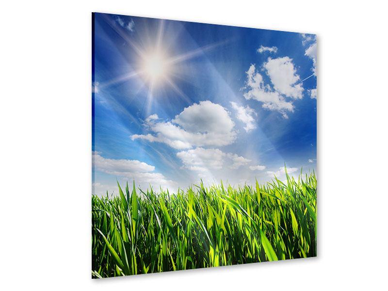 Acrylglasbild Frühlingsgras