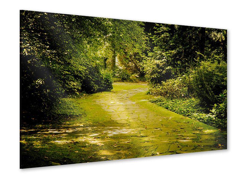 Acrylglasbild Der bemooste Weg