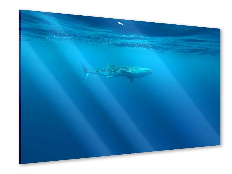 Acrylglasbild Der Walhai