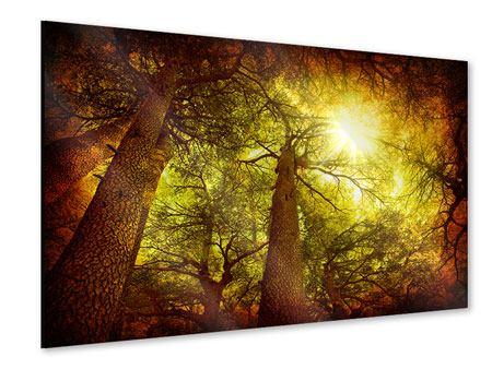 Acrylglasbild Cedar Baum