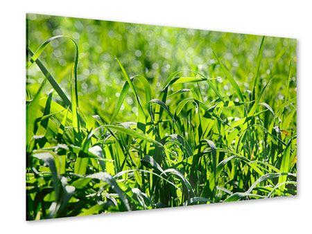 Acrylglasbild Sonniges Gras