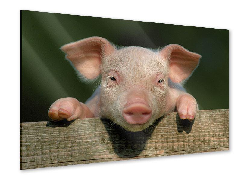 Acrylglasbild Schweinchen Namens Babe