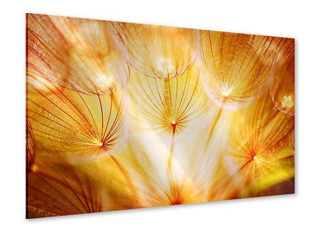 Acrylglasbild Close Up Pusteblume im Licht