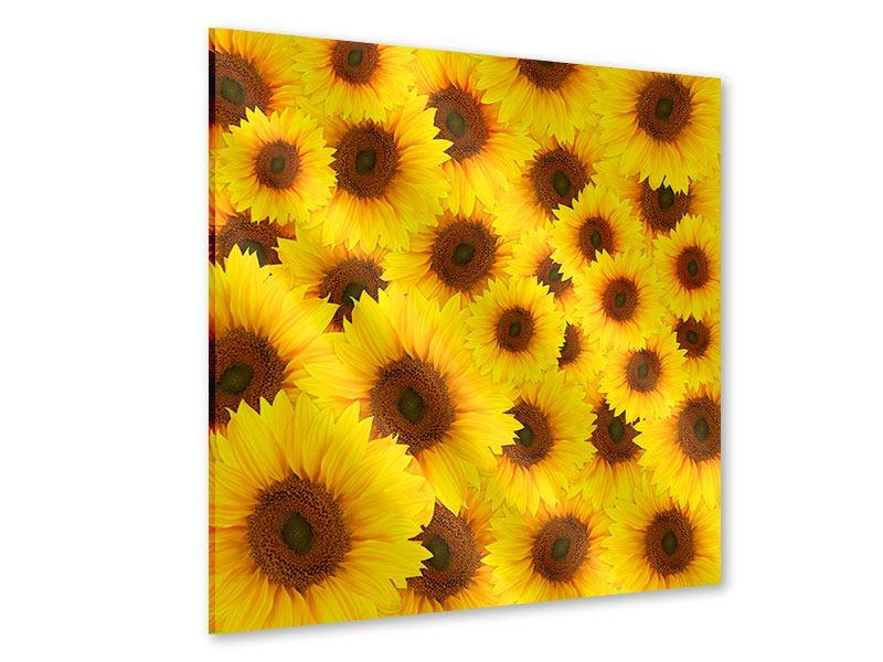 Acrylglasbild Ein Strauss Sonnenblumen