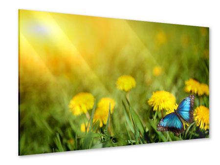Acrylglasbild Der Löwenzahn und der Schmetterling