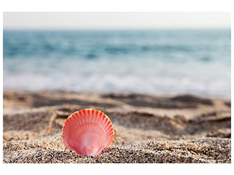 Acrylglasbild Die Muschel