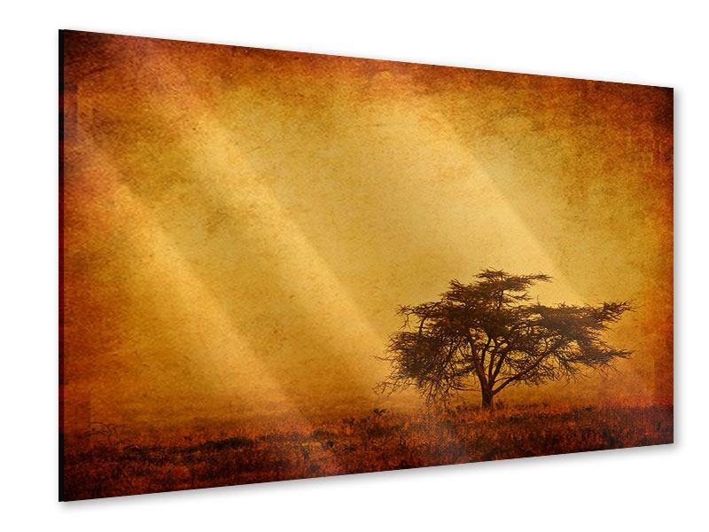 Acrylglasbild Sonnenuntergangsstimmung