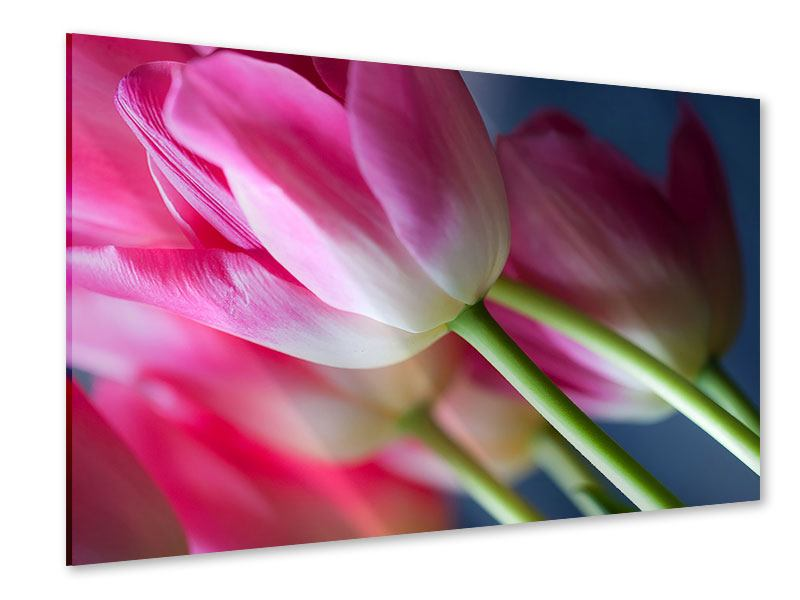 Acrylglasbild Makro Tulpen