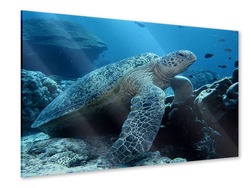 Acrylglasbild Die Meeresschildkröte