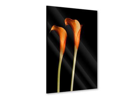 Acrylglasbild Goldige Calla