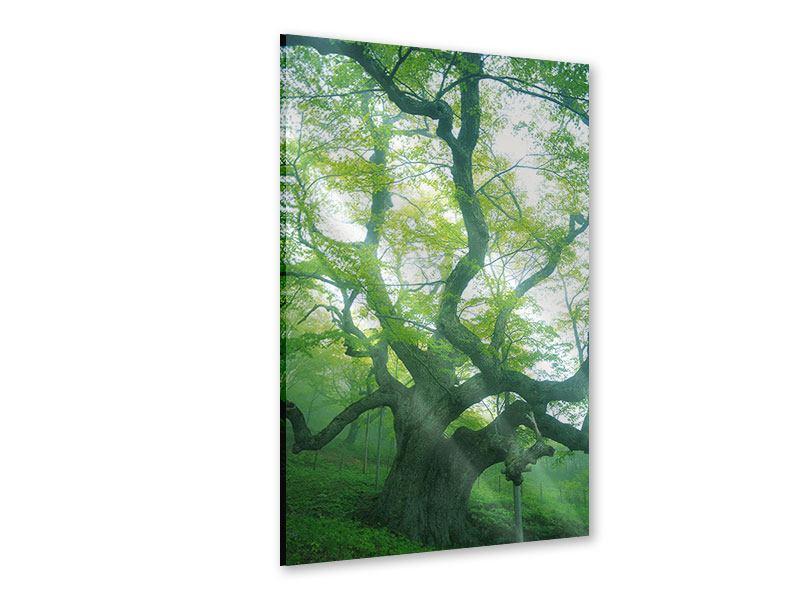 Acrylglasbild Der alte Baum