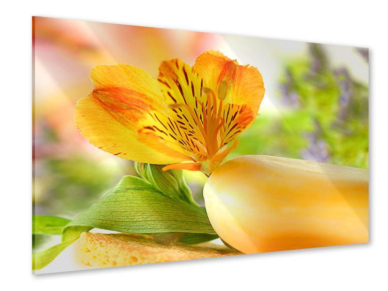 Acrylglasbild Lilien-Frühstück
