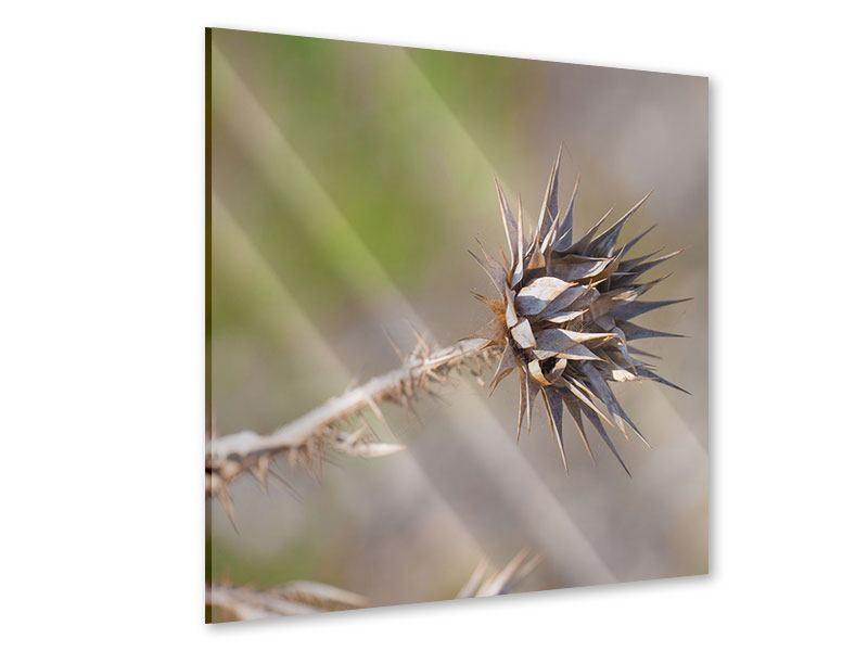 Acrylglasbild Die Wüstenblume