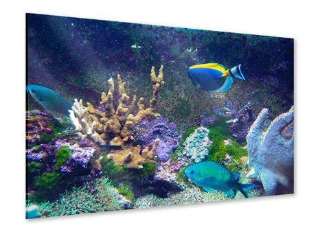 Acrylglasbild Fische