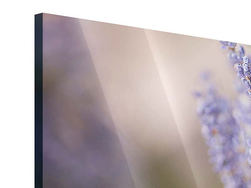 Acrylglasbild Lavendel XXL
