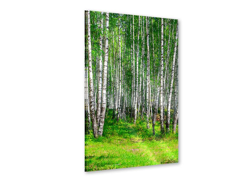 Acrylglasbild Der Birkenwald im Sommer