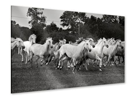 Acrylglasbild Die Mustang Herde